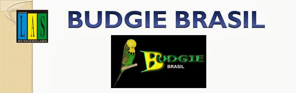 BUDGIE BRASIL