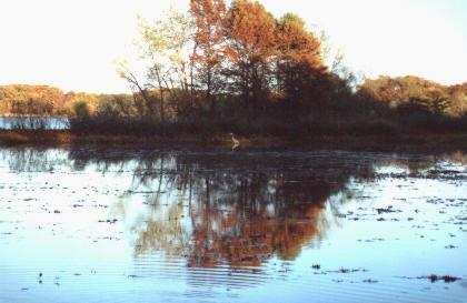 CHBlog: my trip to the marsh