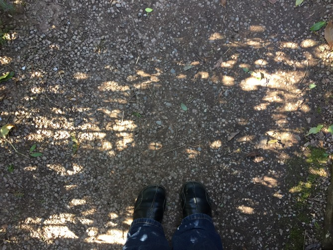 Pretty sun and shadow patterns on the ground