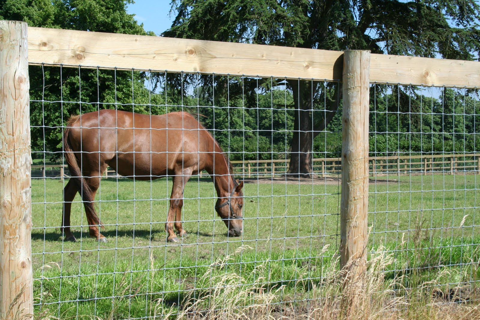Livestock fencing options
