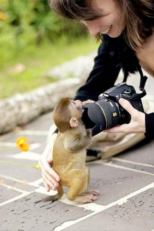 Monkey with camera funny pictures
