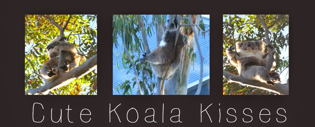 Cute Koala Kisses