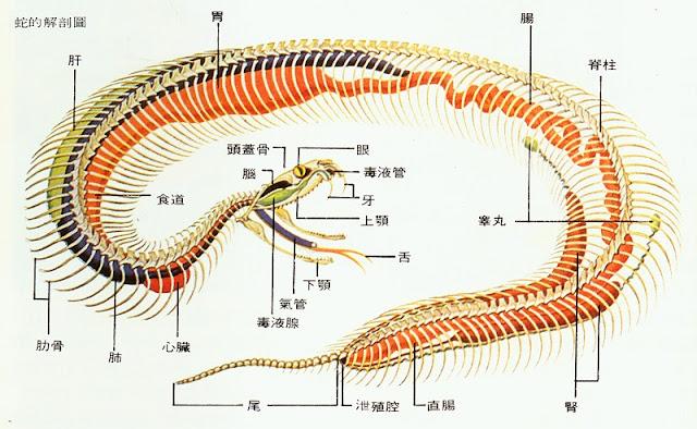 蔡老师的生物天地(图4)