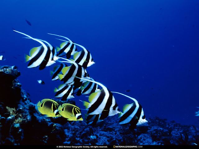National Geographic Wallpapers Photography Underwater Fish