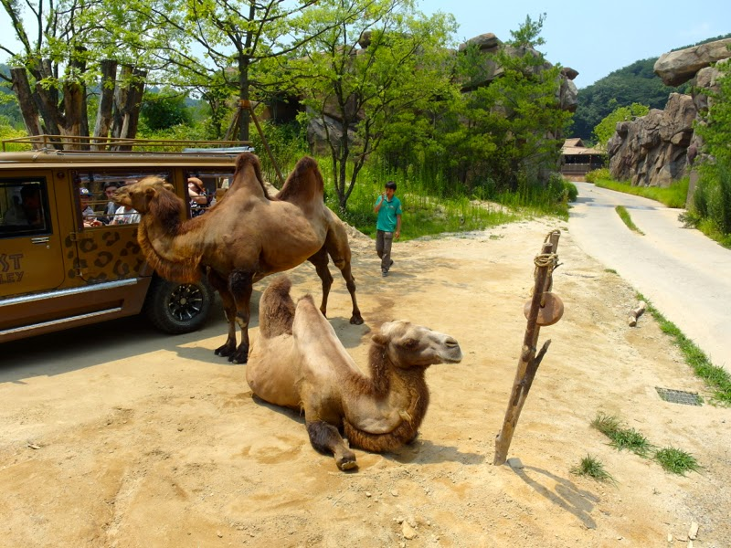 Ewha Summer Studies Field Trip Everland Theme Park Yongin Seoul South Korea lunarrive travel blog