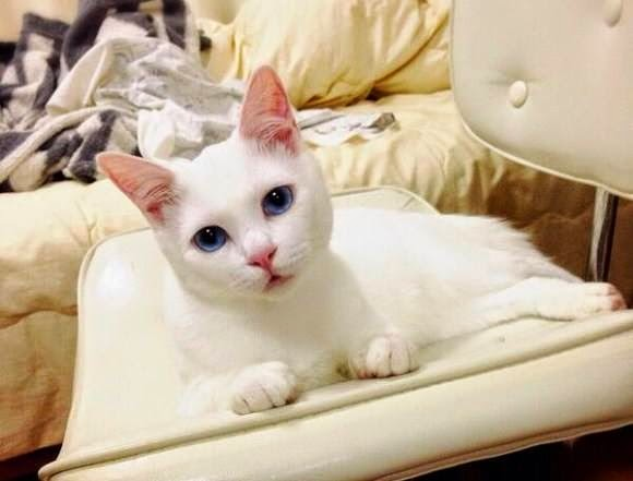 kucing lucu   liataja.com