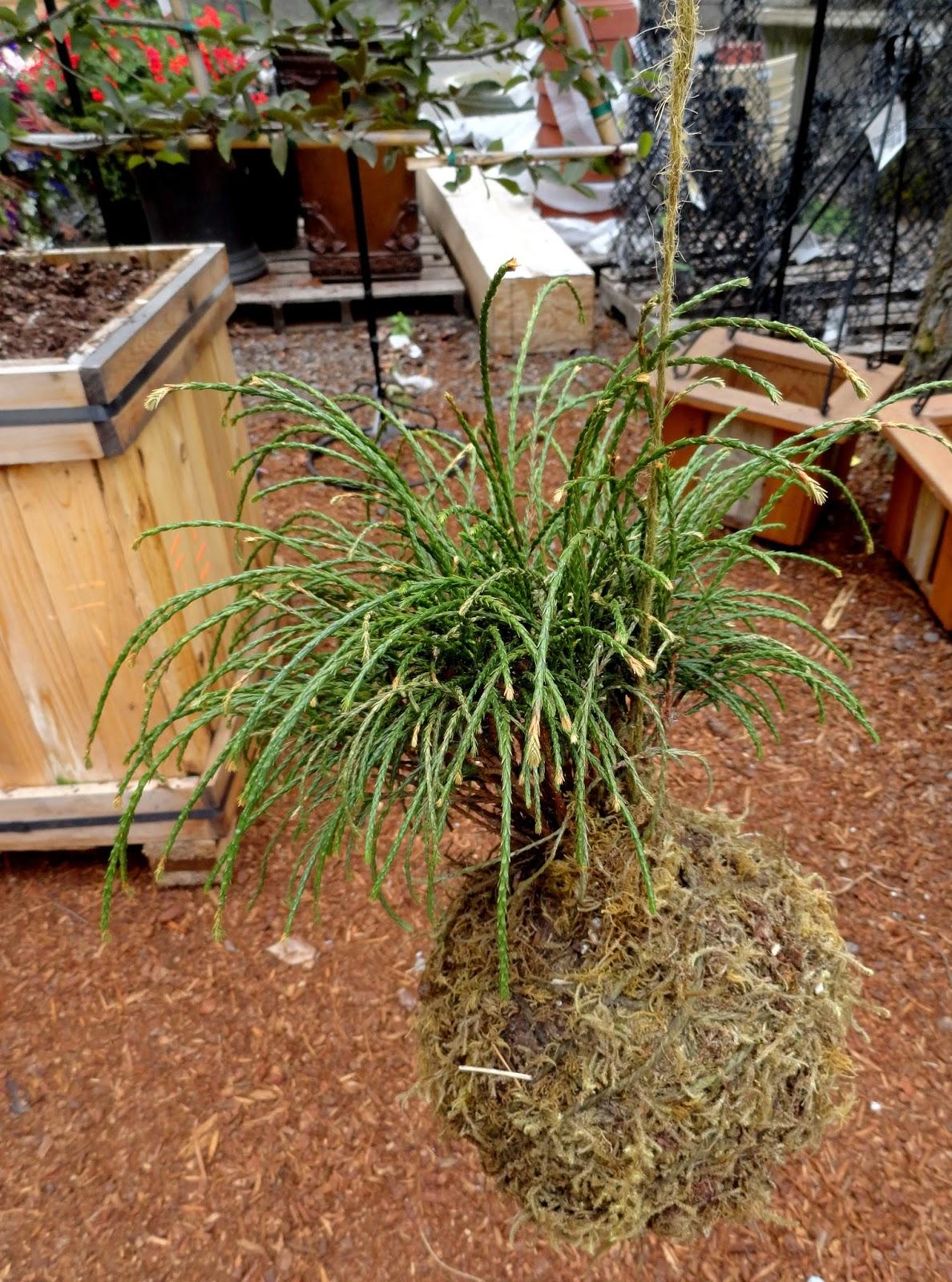 danger garden: Discovering a new nursery, The Garden Corner...