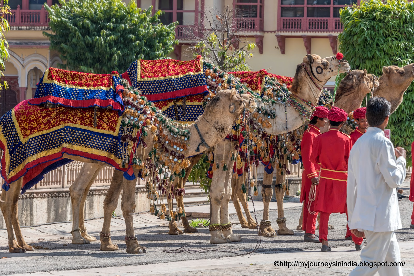 Beautifully Dressed Camels at City Palace Jaipur