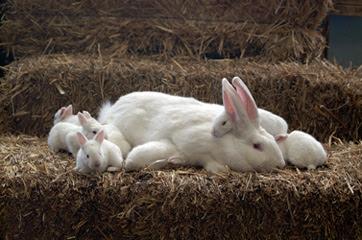 Conejo, California - Wikipedia