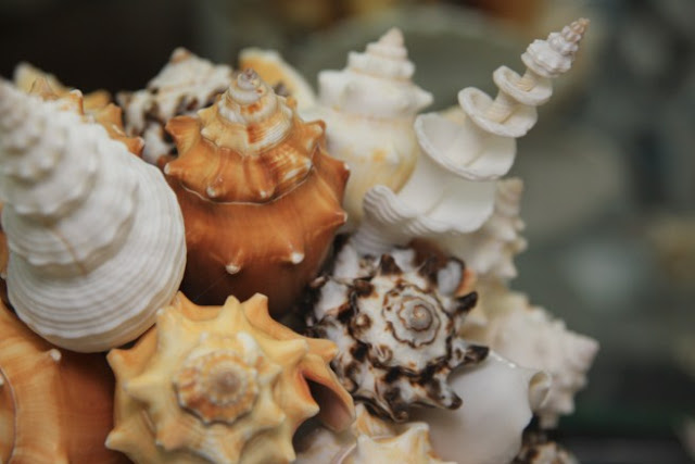 Disenyoss decoracion con olor a mar - Decoracion con conchas ...
