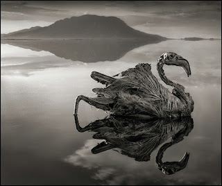 Danau Aneh Yang Mematikan Ini Dapat Mengubah Hewan Menjadi Batu