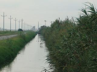 Water channel - Sant Carles de La Rápita