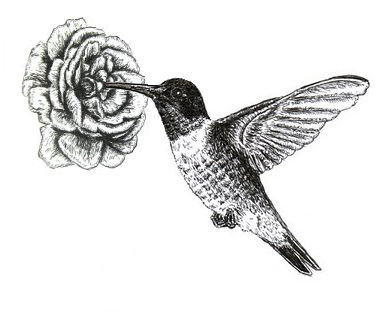 Chuck Does Art Ruby Throated Hummingbird Ink Drawing
