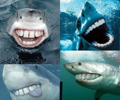 Sharks with human teeth looks like a dorkfish