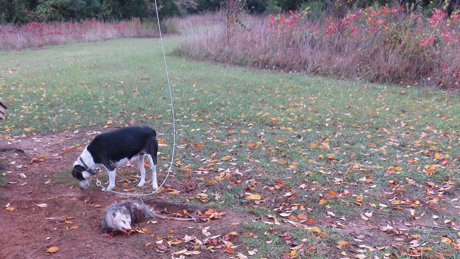 how to build a zipline for a dog