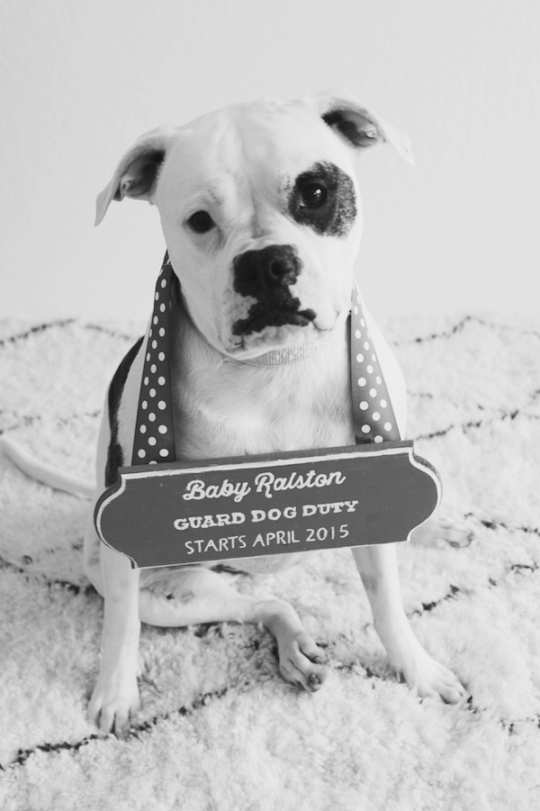 Pregnancy announcement with the dog - sad face outtake