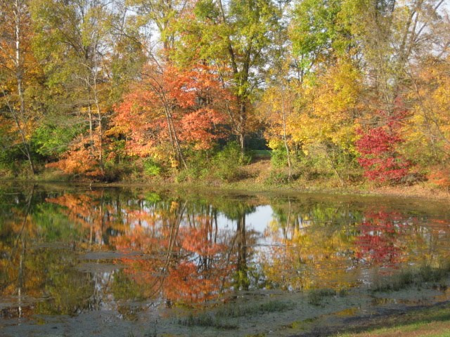 Autumn Glimmer