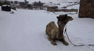 Hujan Salju Di Mesir