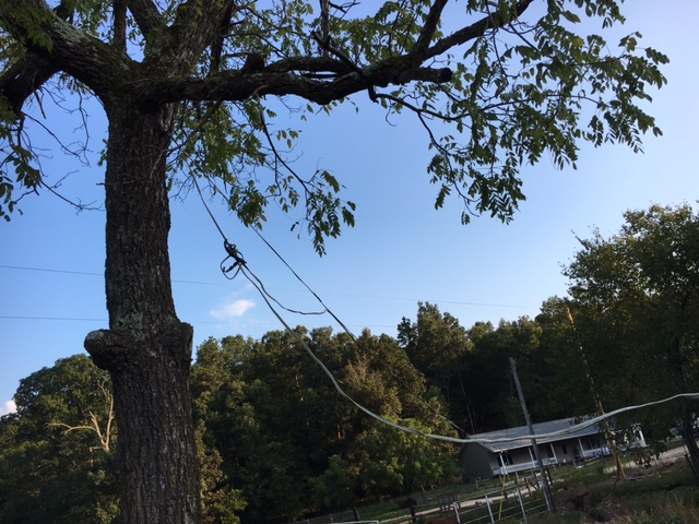 Tree Wire