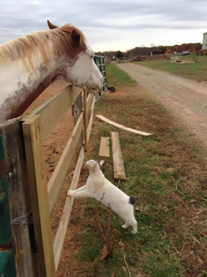 foto eric si kucing dan topper si kuda 01
