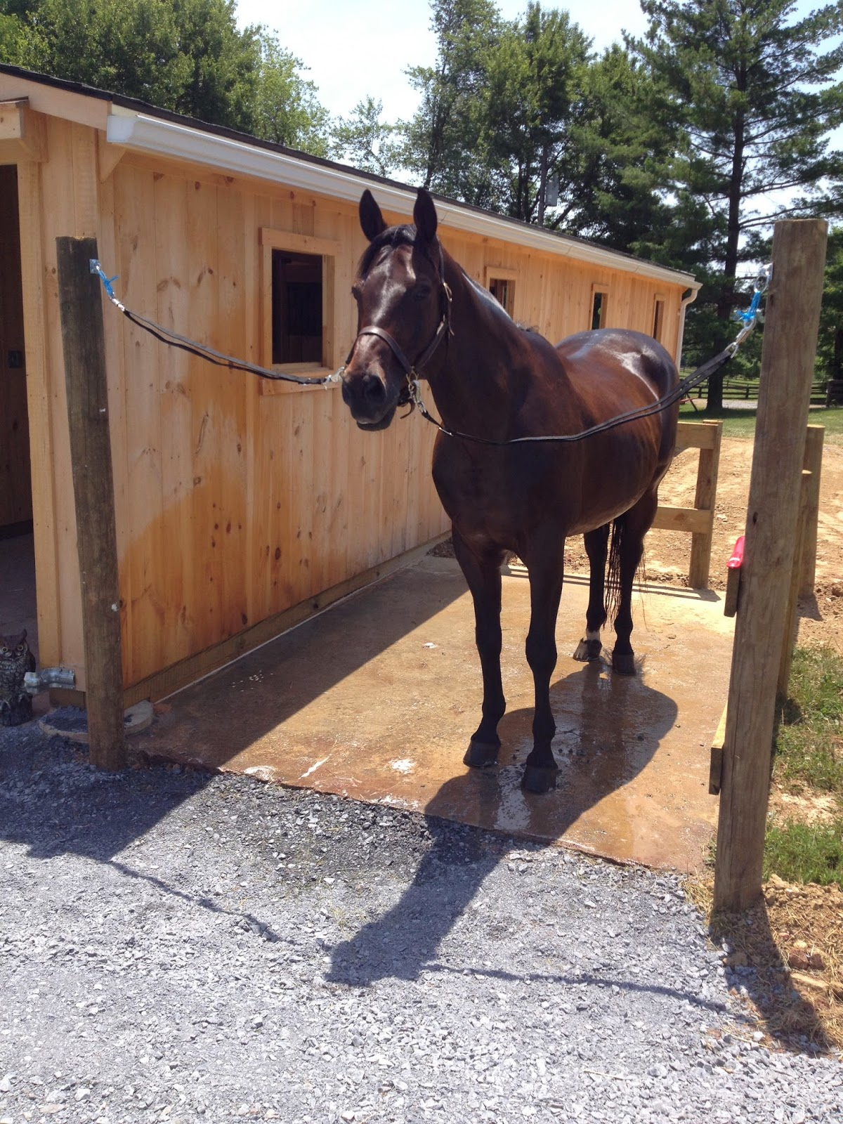 Building managing the small horse farm outdoor wash for Horse farm design