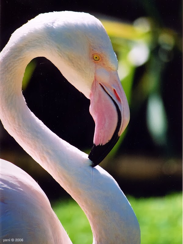 r.i.p greater, the world's oldest flamingo