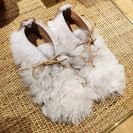 Furry Fun! Tory Burch Evan Shearling boots.