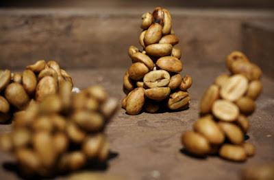 Café con excrementos de civeta, de sabor parecido al chocolate