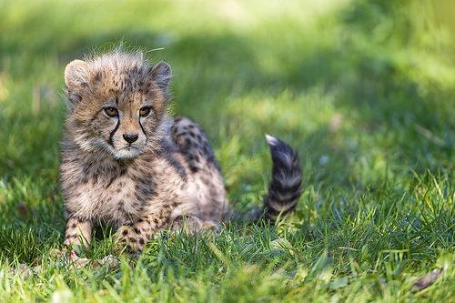 Cute Baby Leopard