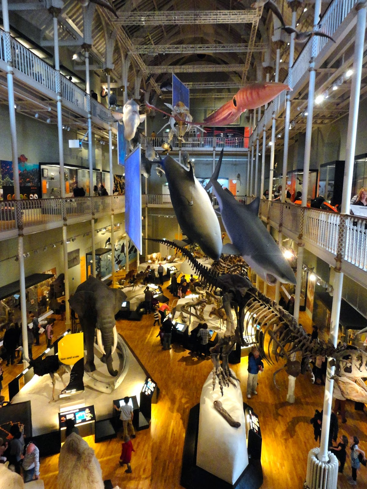 Natural History hall in the National Museum of Scotland, Edinburgh