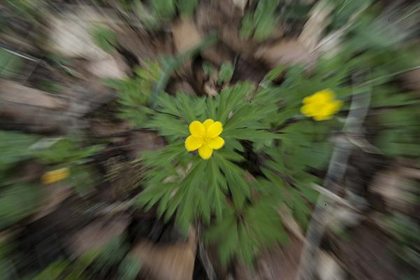 Sotie nature et fleur effet de zoom