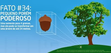 Uma semente pesa 4gramas, mas pode se transformar em uma árvore de 24 metros
