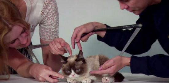 Video Grumpy Cat, Kucing Bengis Yang Bakal Menjadi Ikon Patung Lilin
