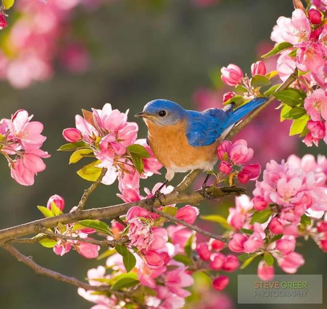 Attractive Birds