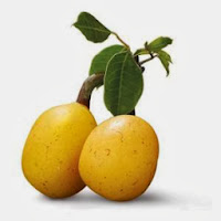 Fruit of the Marula Tree