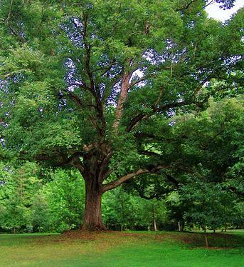 Psicologos peru el arbol confundido for America todo un inmenso jardin