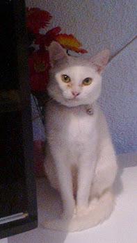 meu gato Chico
