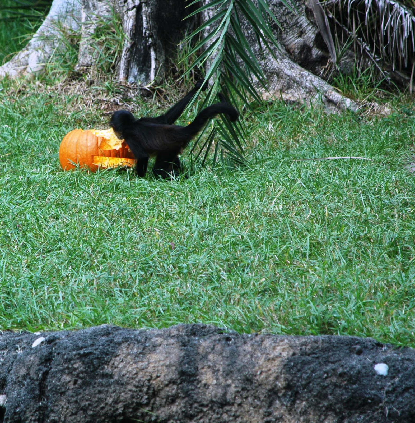 Boo at the Zoo at the Palm Beach Zoo