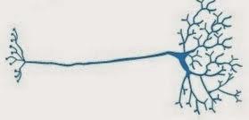 Macam-Macam Jenis Neuron dan Fungsinya