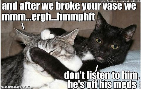 Cute Funny Memes For Him : Cute and funny pictures don t listen to that cat