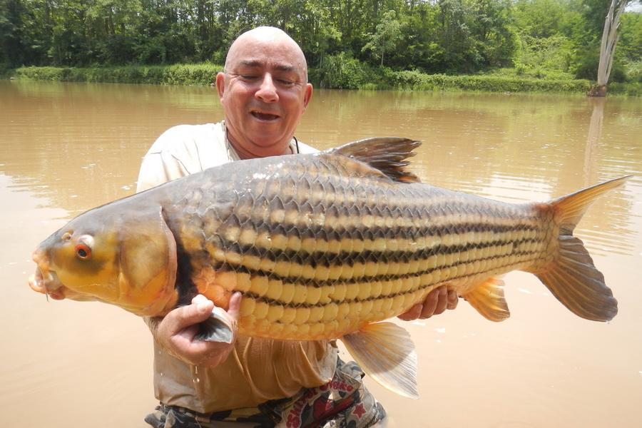 Big Fishes Of The World CARP JULLIEN GOLDEN Probarbus Jullieni