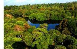 Pengertian Dan Contoh Fenomena Biosfer