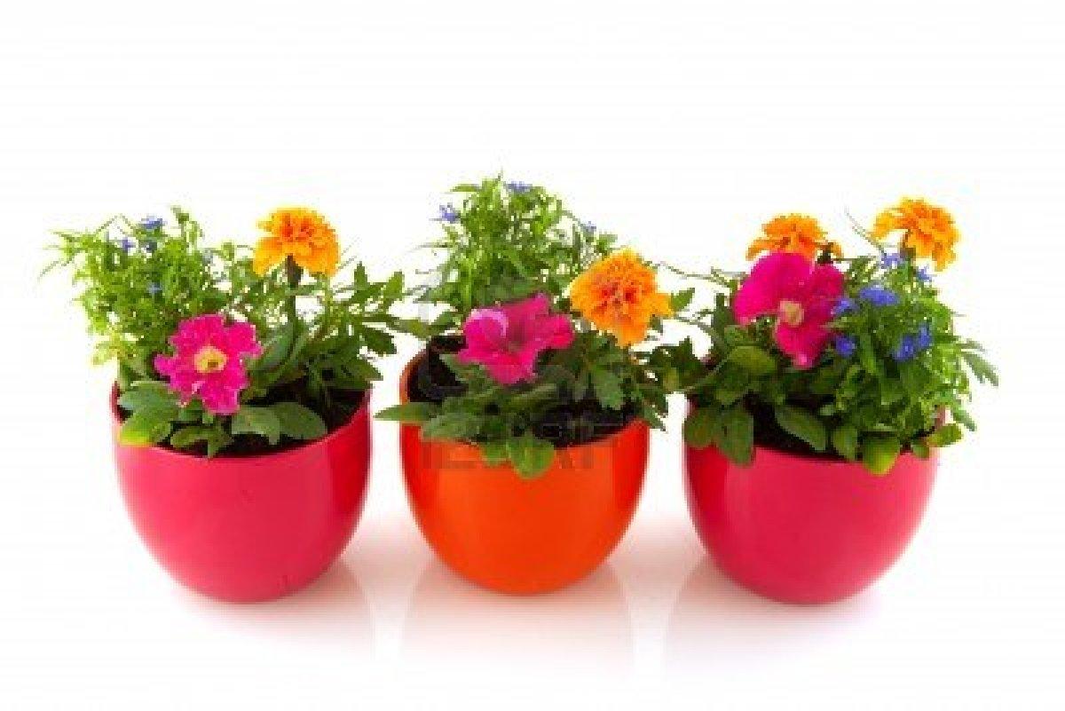 Garden center ejea problemas comunes en nuestras plantas for Plantas aromaticas en macetas