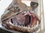 Takie potwory też są jadalne.