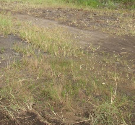 Jual Tanah Kavling dan Perumahan di Lampung