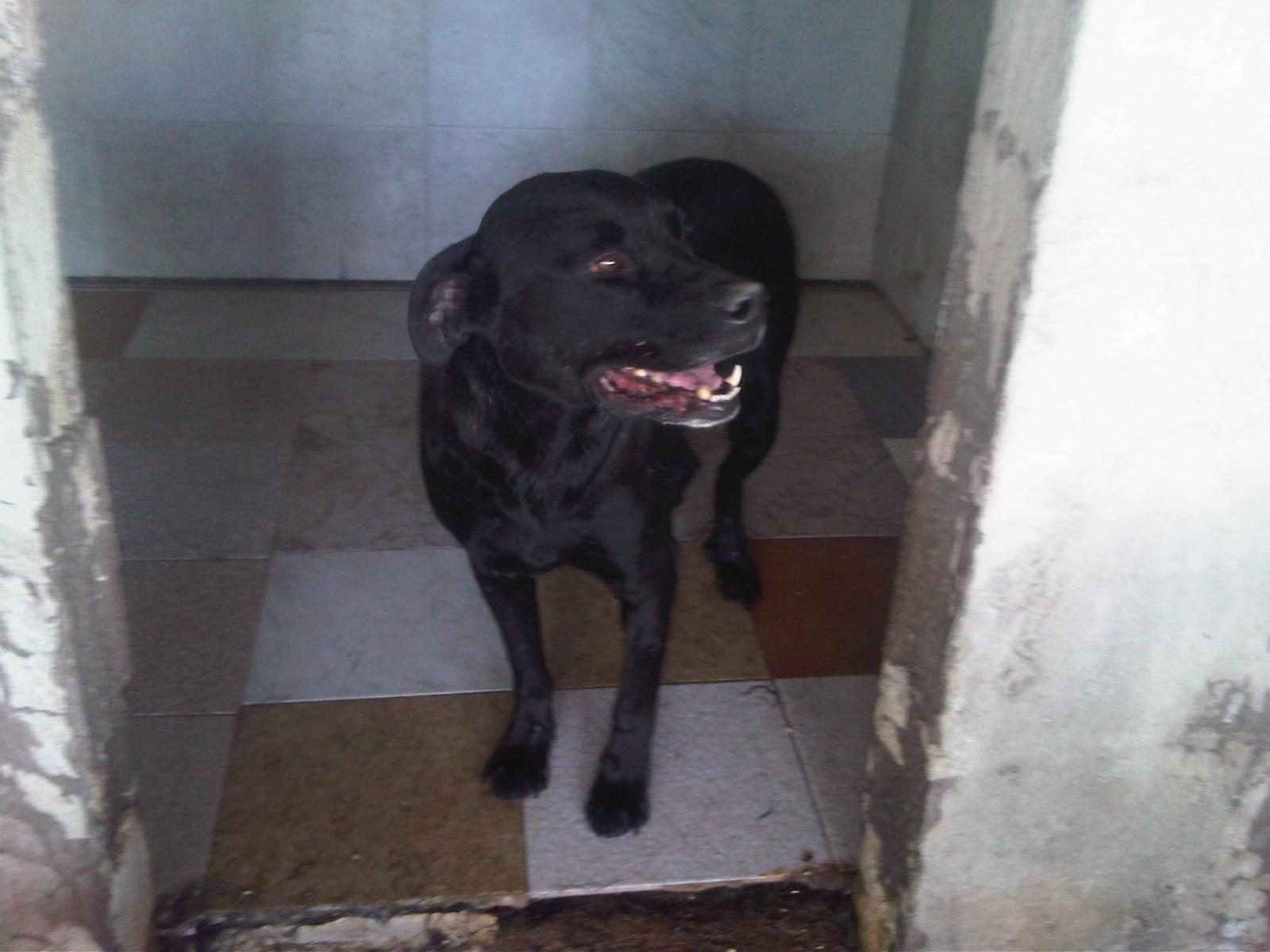 Associazione amici del cane di latina nero vive da sempre - Portare il cane al canile ...