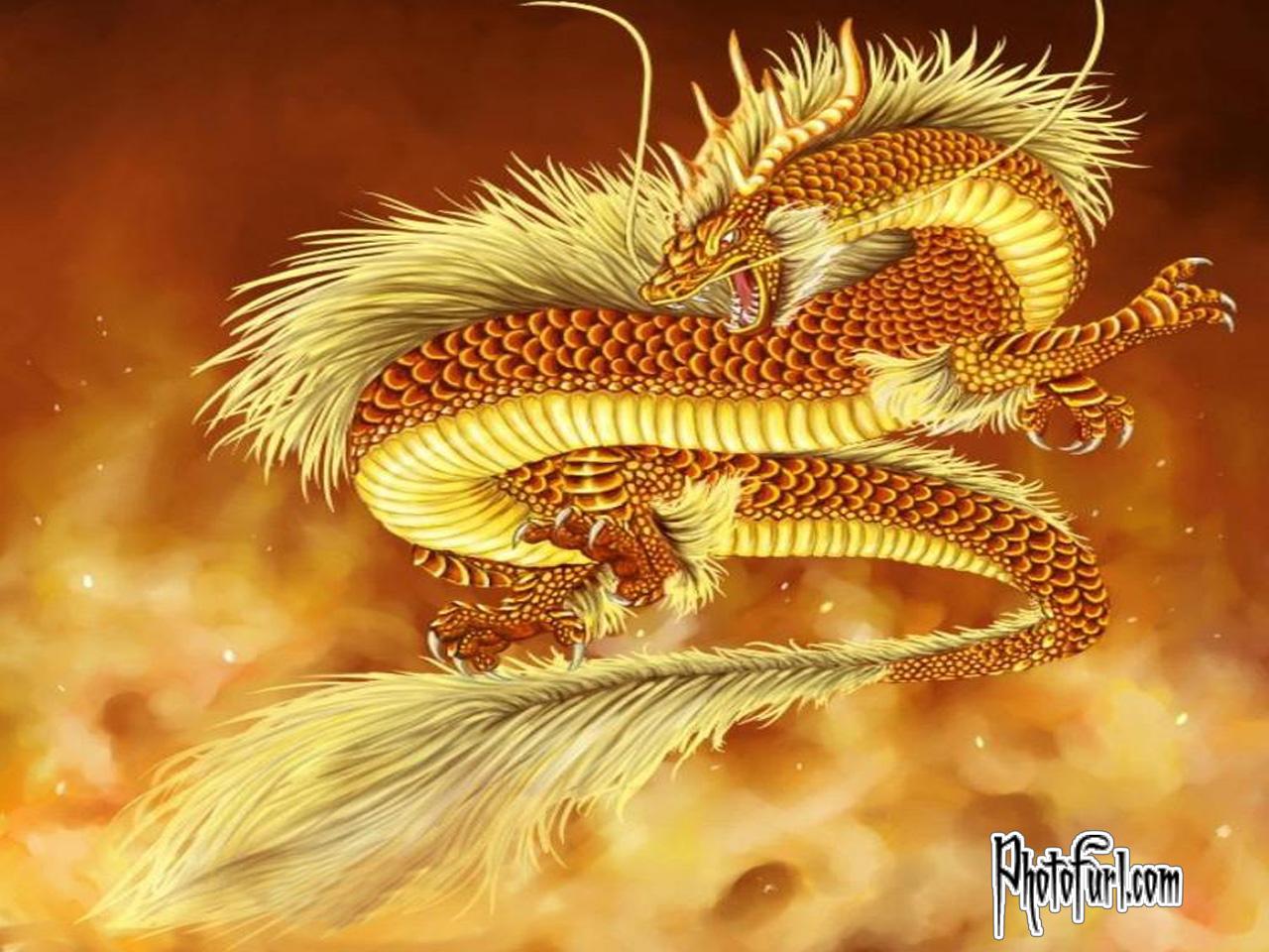 http://1.bp.blogspot.com/-YV3oO8CAbTw/TcpftoB8YCI/AAAAAAAACJU/EW946iHNlAs/s1600/dragongoldfire_free_download_wallpaper.jpg