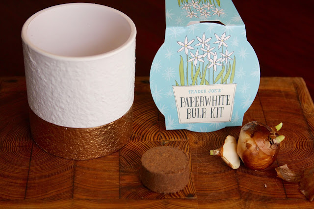 Trader Joe's Paperwhite Bulb Kit