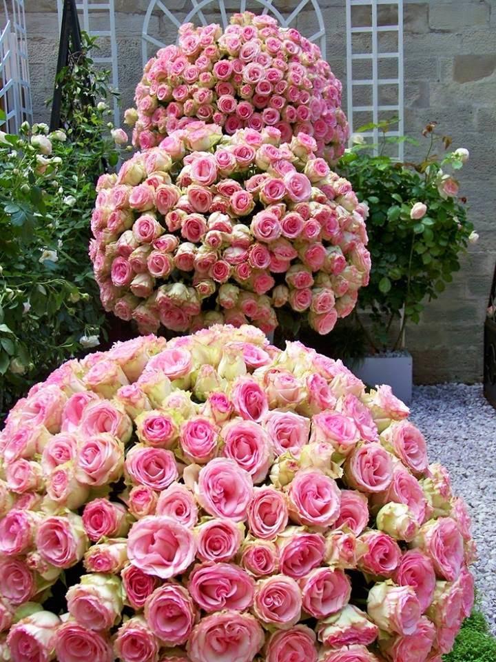 Ladiesfashionsense-Roses