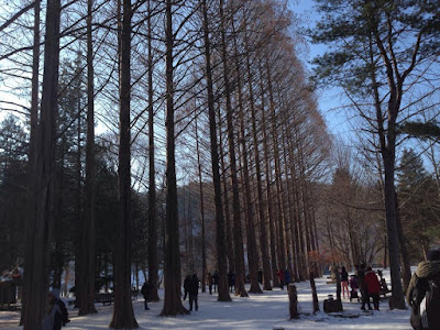 Nami Island on a winter day in South Korea